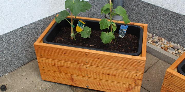Pflanzkasten selber bauen – aus Douglasie und einem Mörtelfass